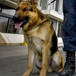 General News | Dog News Articles - Bravery award for canine hero