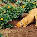 Dog and Puppy Training | Ask the Trainer - How Can I Stop My Dog Digging Up The Garden?