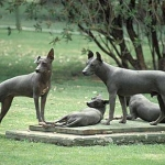 Dog Trivia | Interesting Facts and Dogs | Funny Dog Posts - Have you ever heard of the Xoloitzcuintli dog breed?