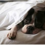 Dog and Puppy Training | Ask the Trainer - How can I get my dog off the bed at night?
