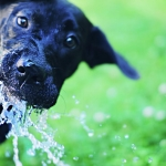 Dog Nutrition | Ask the Nutritionist - How Much Water Does My Dog Need?