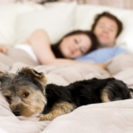 Dog and Puppy Training | Ask the Trainer - Hi I'm still having trouble getting the dog off the bed at night?