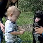 General News | Dog News Articles - Dog To The Rescue Saving Boy From Abusive Babysitter