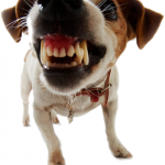 Dog and Puppy Training | Ask the Trainer - How Do I Deal With My Dogs Aggression?