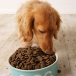 Dog Nutrition | Ask the Nutritionist - My Dog Is Losing Weight & I Don't Know Why?