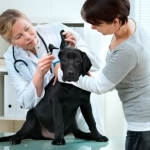 Canine Health | Dog Health Articles - 'Pet Health Care' Costs Have Soared