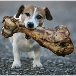 Dog Nutrition | Ask the Nutritionist - What Bones Can My Dog Eat?