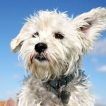 Dog Nutrition | Ask the Nutritionist - My dog has bad Eczema