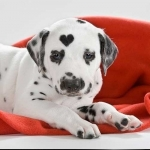Dog Health | Ask the Vet - My Dog Is On Heat!