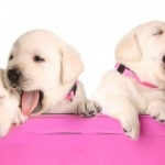 Dog and Puppy Training | Ask the Trainer - My Puppy Cries Throughout The Night -  please help!