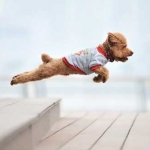 General News | Dog News Articles - Free Flights For Animals