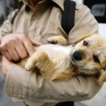 General News | Dog News Articles - Program with tiny budget makes huge difference for pets, owners
