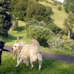 General News | Dog News Articles - Where can I go with my dog?