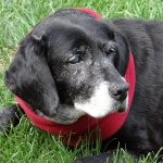 General News | Dog News Articles - Teen Helps Aging Dogs Find Their Forever Homes