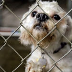 General News | Dog News Articles - Rescued dogs from cleveland kidnapper awaiting adoption