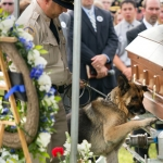 General News | Dog News Articles - Police Dog Bids Farewell