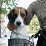 "General News | Dog News Articles - Why China's ""One Dog Policy"""