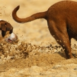 Dog and Puppy Training | Ask the Trainer - How Do I Stop My Dog From Digging?