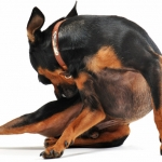 Canine Health | Dog Health Articles - Does my dog have a food allergy?