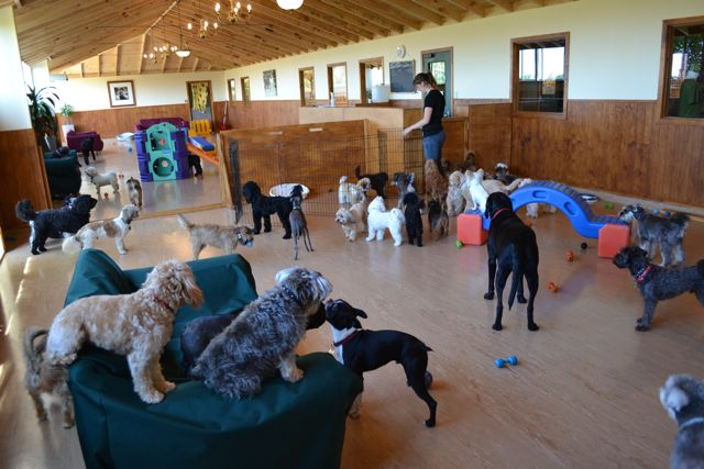 Doggy Daycare -  A little slice of K9 heaven