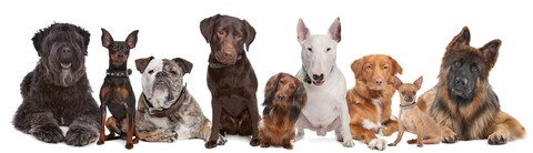 DoggleHQ - New Dog Owners Portal
