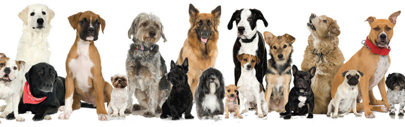 Dog Breed Masthead