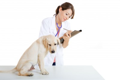 Dog Diabetes - Mellitus information