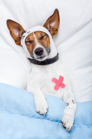 Dog Health and First Aid