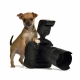 Pet Photography - Directory