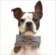 Pet Accessories | Pet Wear - Directory