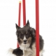Puppy and Dog Training - Halifax Veterinary Centre
