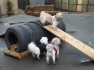 Sharna's Doggy Daycare