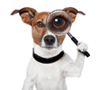 Doggle Directory Search