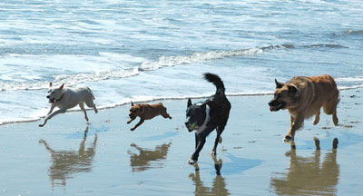 Dog Exercise Routines | Dog Friendly Beaches