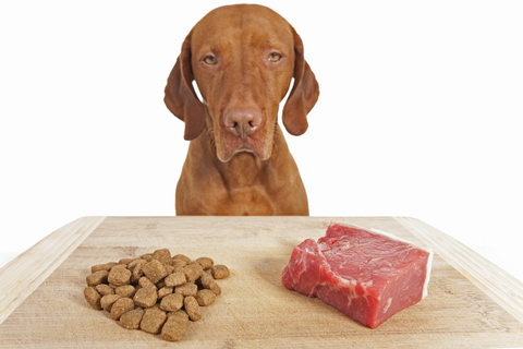 Dog Nutrition Advice
