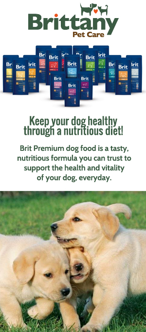 Buy Premium And Super Premium Quality Dog Food
