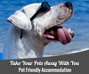 Pet Friendly Accomodation for you and your dog
