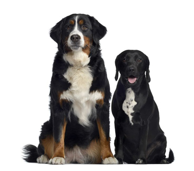 Dog Breeds Select & Trivia, Dog Information