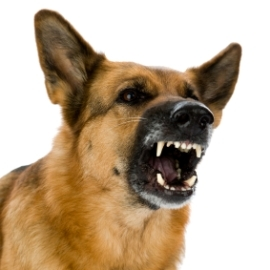 Aggression - dog training information