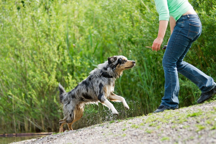 Come  - dog training information