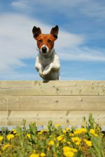 Escaping - dog training information