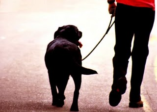 Heel - dog training information