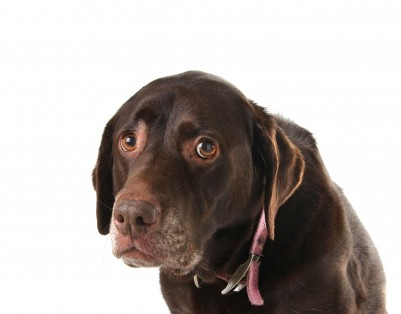 Separation Anxiety - dog training information