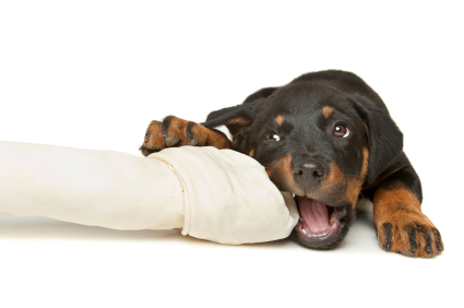 Chewing - dog training information