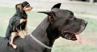 Dominance - dog training information