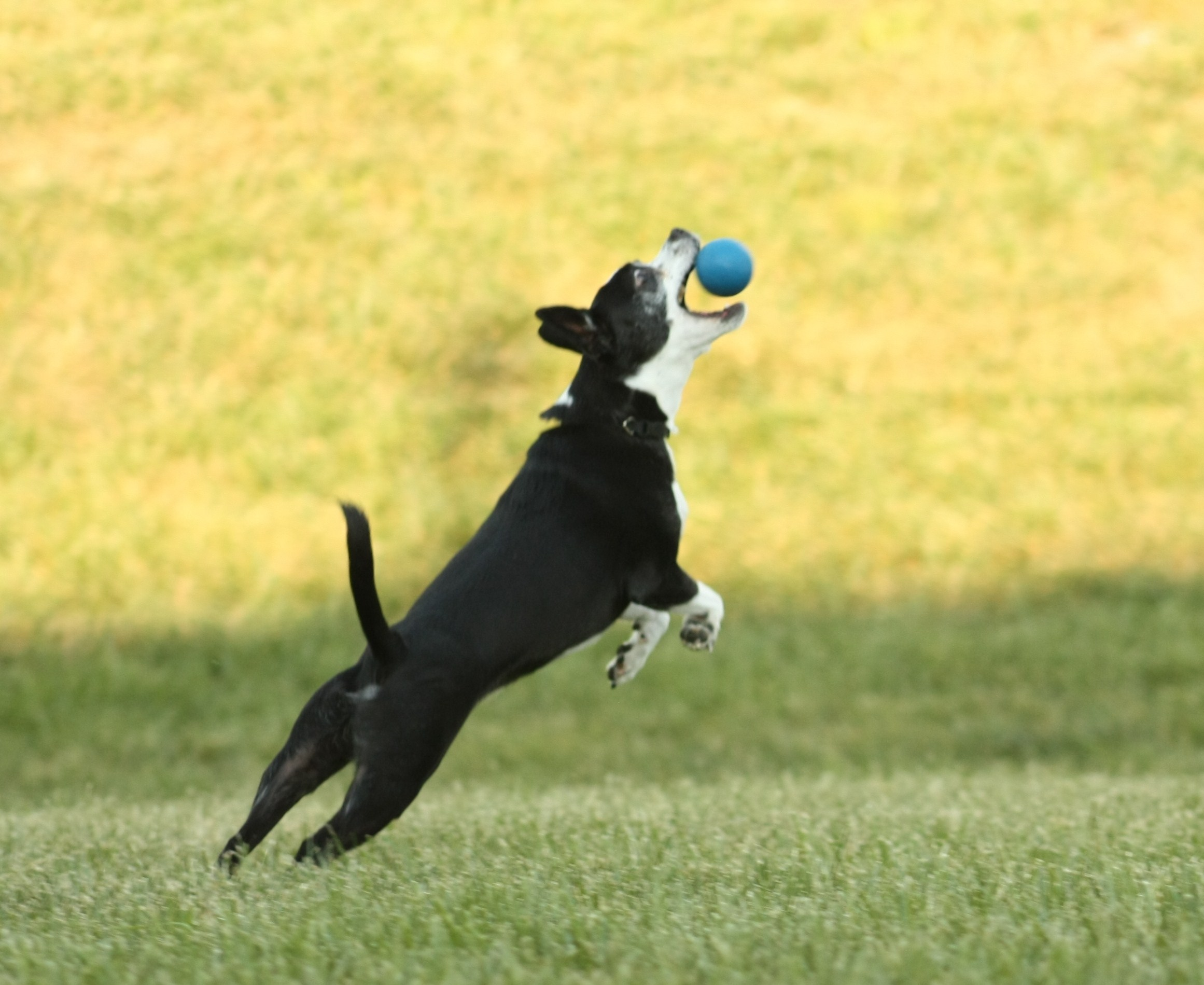 Fetch - dog training information
