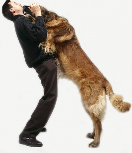Jumping Up - dog training information