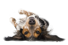 Roll Over - dog training information