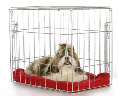 Puppy Crate Training