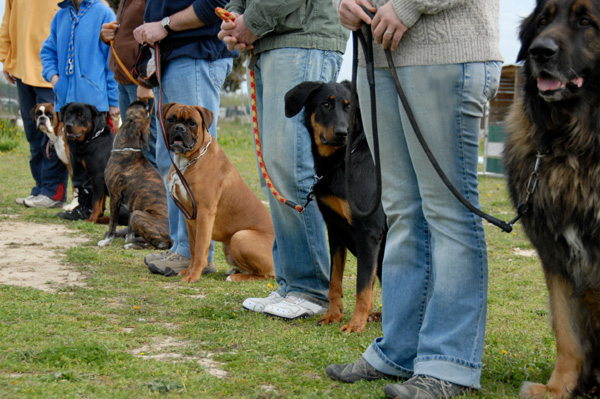 Dog Training Information - Dog Advice and Glossary of Dog Obedience Terms